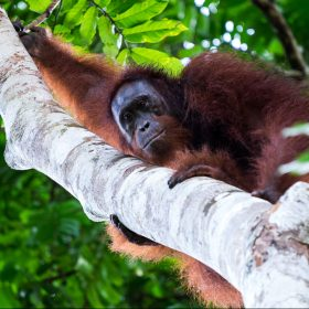 jungle in borneo<span>Travel Documentary</span>