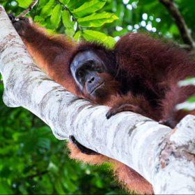 Borneos letzte Urwälder<span>Reisefotografie</span>